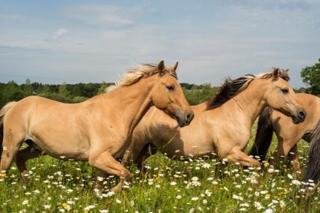 accompagnement avec le cheval